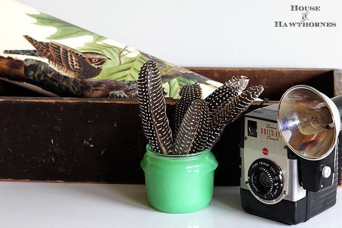Vintage vignette with a Brownie Bull's-Eye Camera, old wooden drawer, feathers, vintage bird print and jadeite Walker's Honey Whip jar.