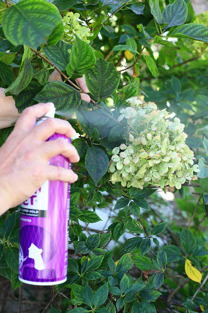 how to dry hydrangeas with hairspray