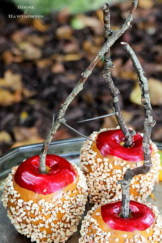 DIY decorative caramel apples with twig stems