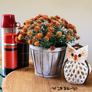 Fall vignette with vintage thermoses, fall mum and an owl