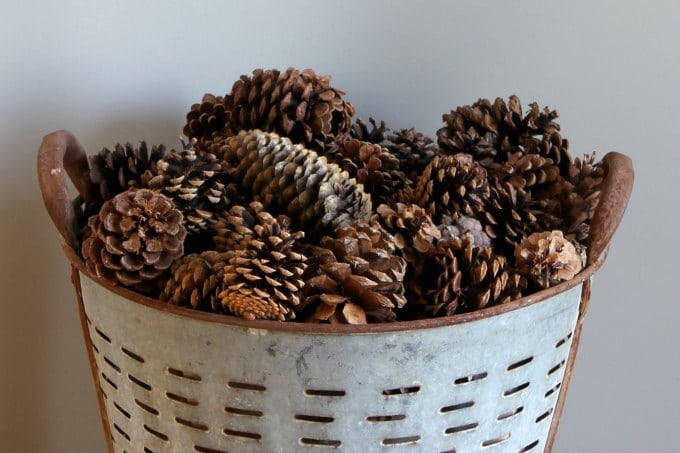 Learn how to use pinecones for winter home decor. Decorating during that awkward time between Christmas decor coming down and spring decor going up.