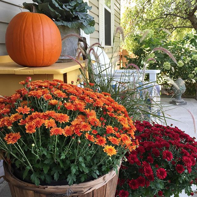 Mums on fall front porch