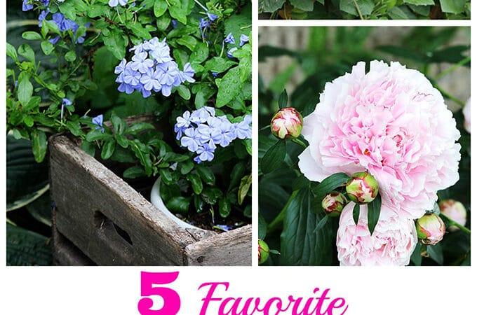 5 Favorite Flowers For The Garden
