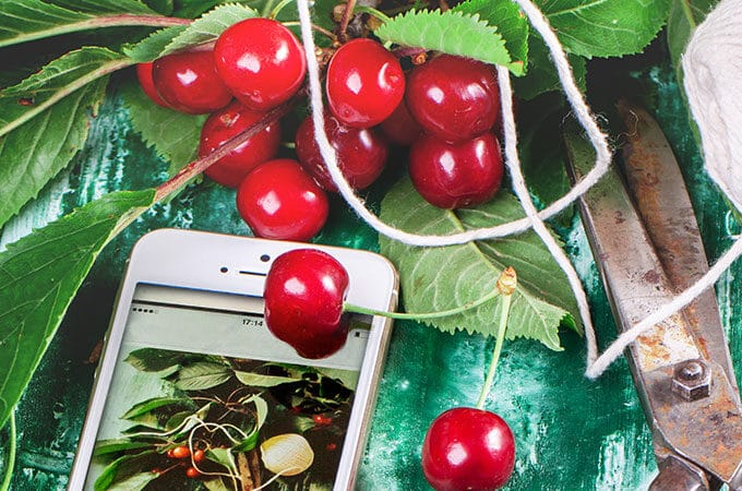 Best Gardening Apps To Rock Your World