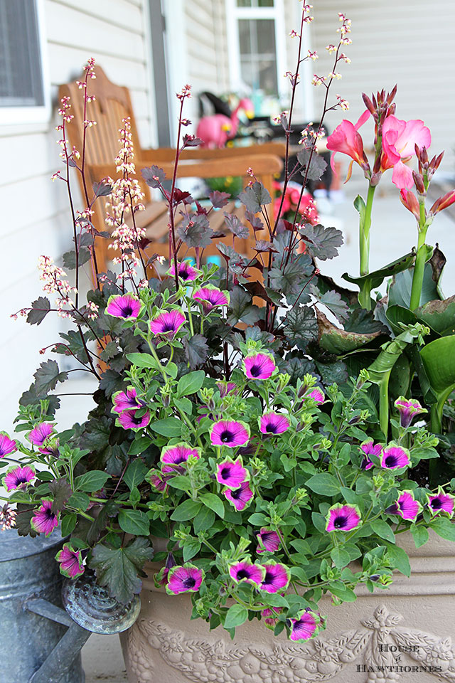 Plant combination idea for container garden including supertunias, canna and coral bells.