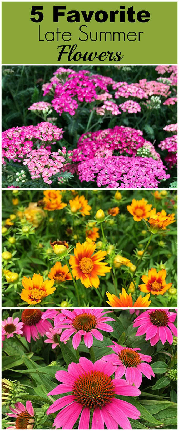 Bring color to your garden with these late summer flowers. Let's face it, by mid-July a lot of your annuals have gotten all leggy and even if they're not dead yet, they're not looking as spiffy as they did in May.