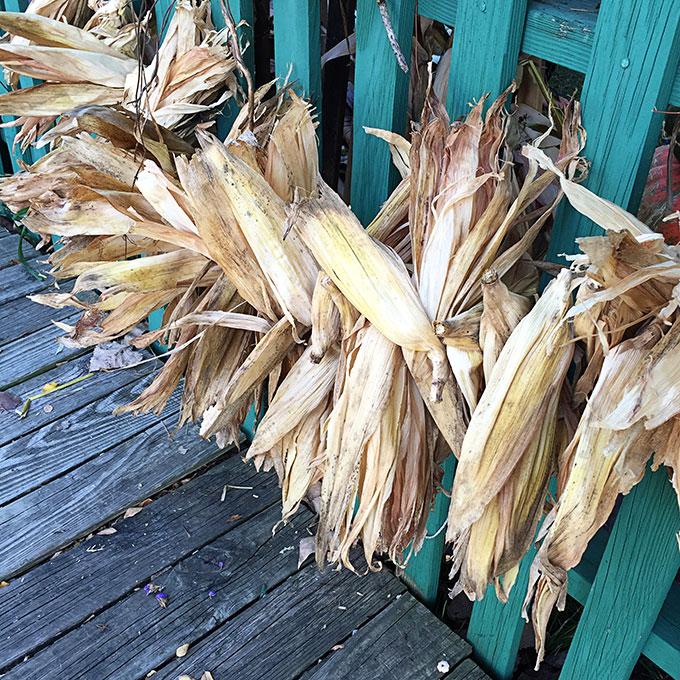 corn-stalk-garland-fall-434