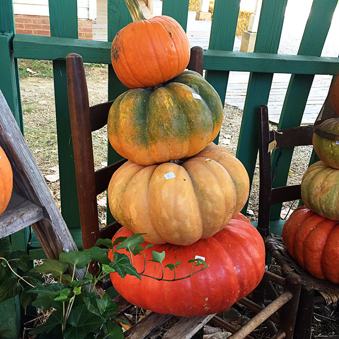 stacked-pumpkins-fall-4340