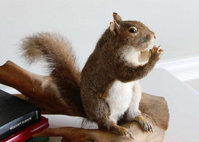 Adventures of buying a taxidermy squirrel at the antique mall.