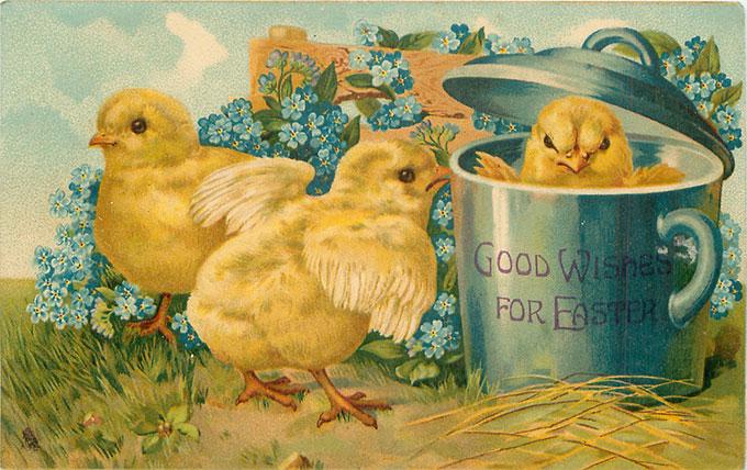 Vintage Easter images - printable Tuck postcard image - chicks in pot