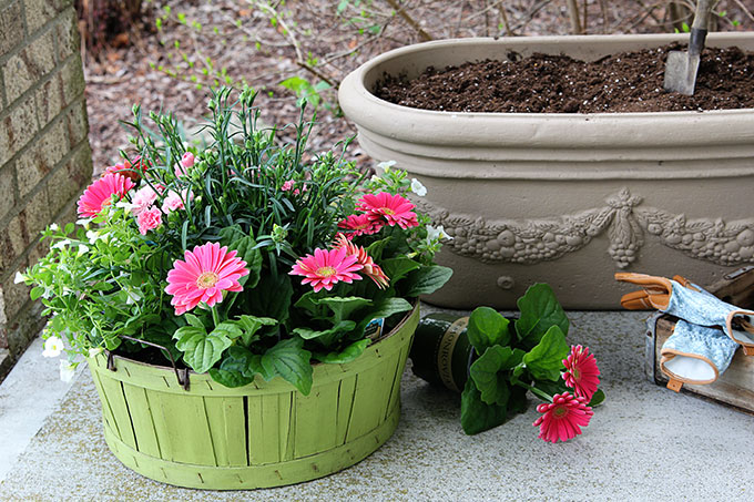 Spring flowers for your garden containers