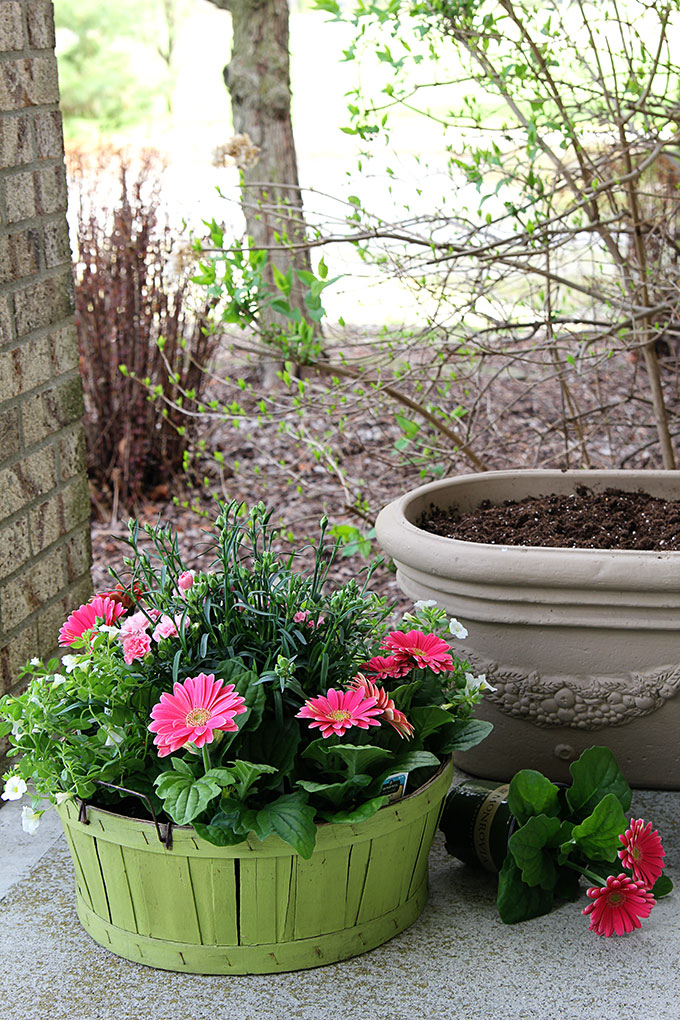 Colorful flowers for garden pots