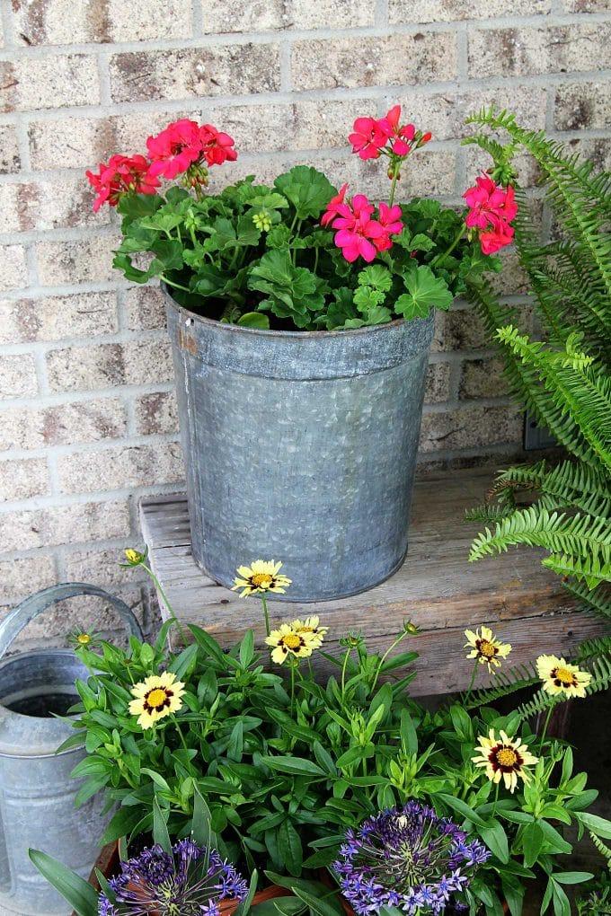 Pink geranium in a galvanized bucket