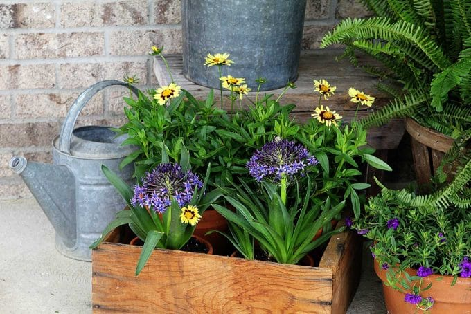 Flowers in an old wooden crate
