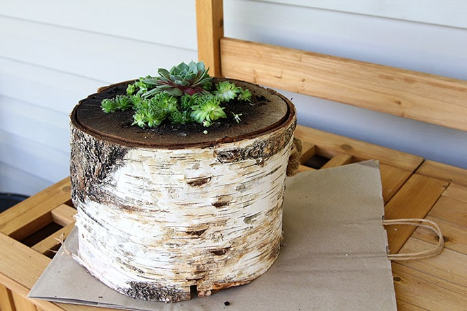 How to plant succulents in a log