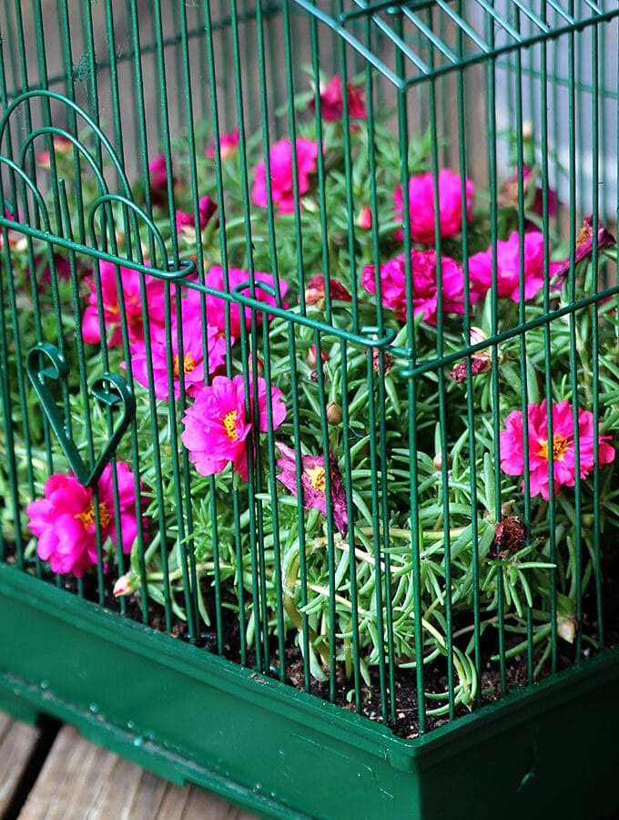 How To Make A Birdcage Planter: Parakeet Approved