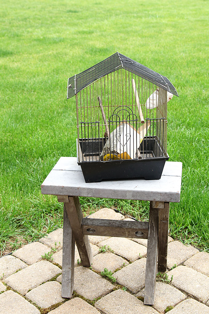 Birdcage being repurposed into a flower planter