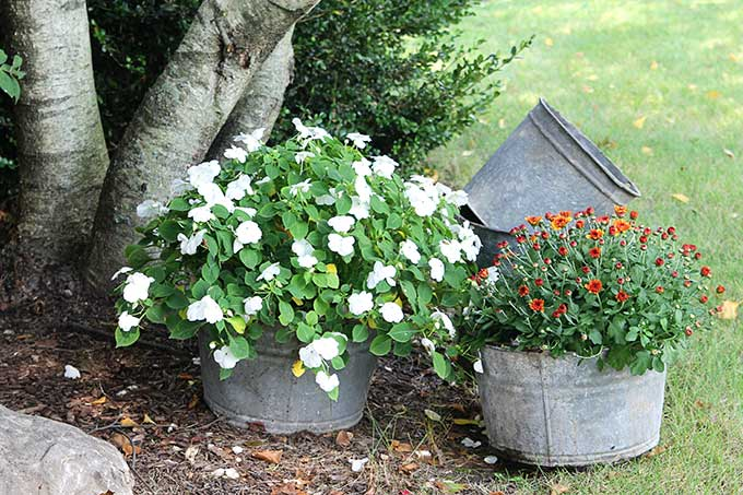 Galvanized pails, buckets and tubs for fall decor