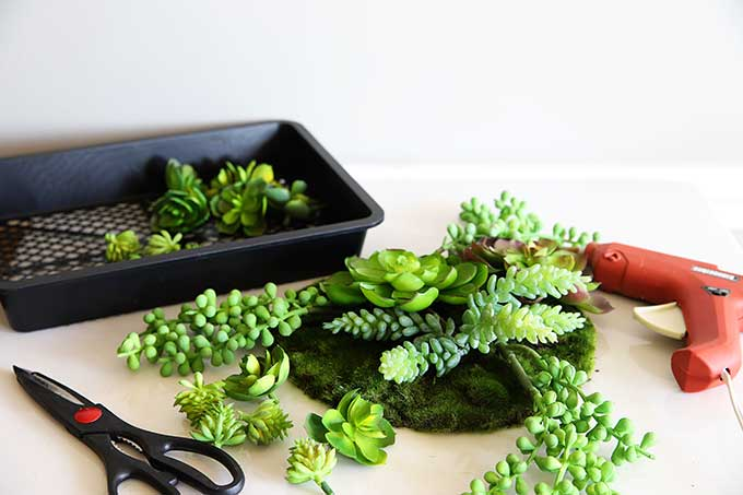 Making faux succulent dish