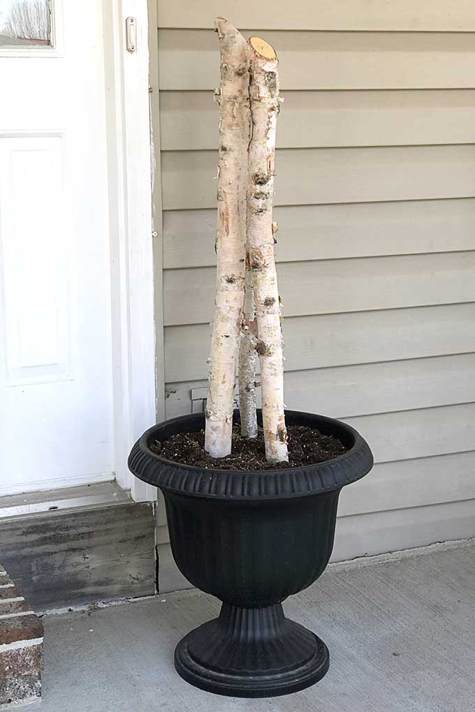 Birch logs in a porch pot