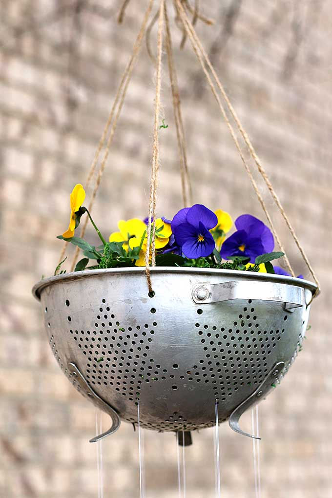 Repurposed colander used as planter