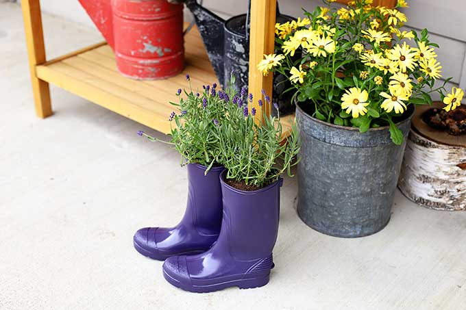 How to make planter from rubber boots