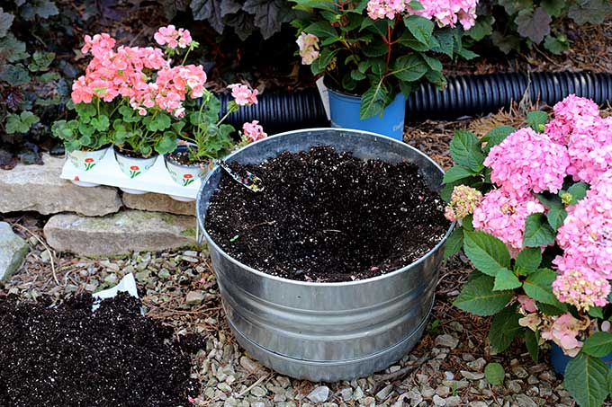 How To Grow Hydrangea In Pots - House of Hawthornes
