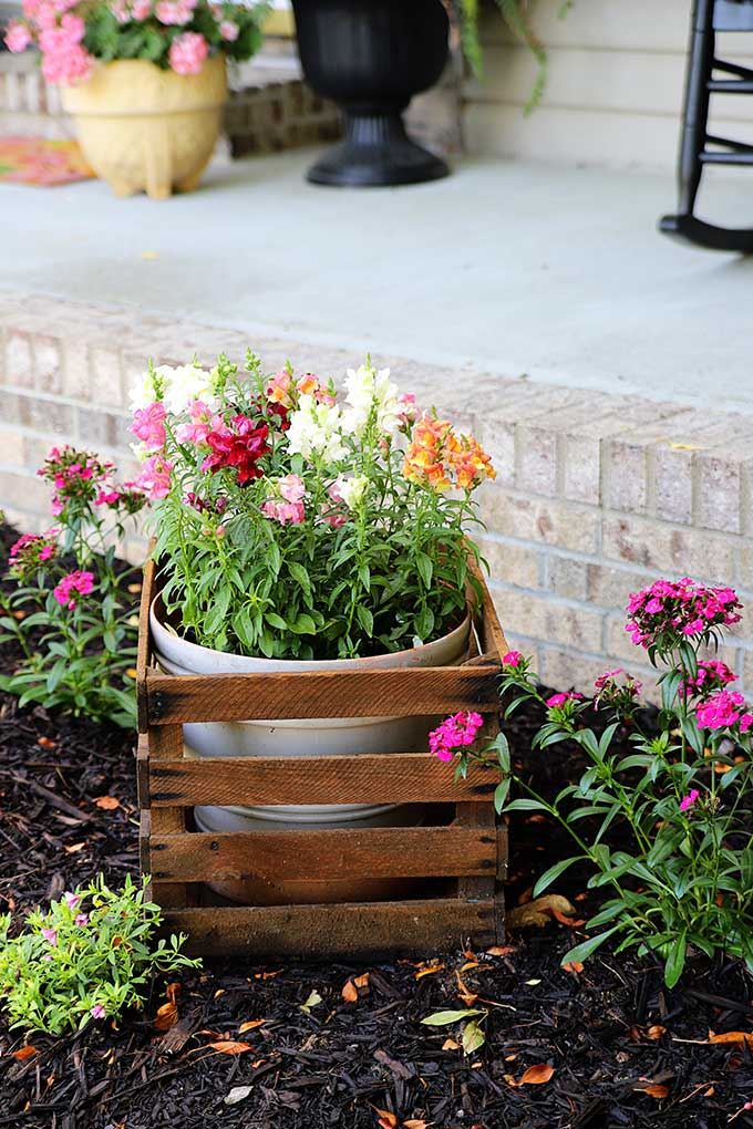 Colorful flowers for your flower beds