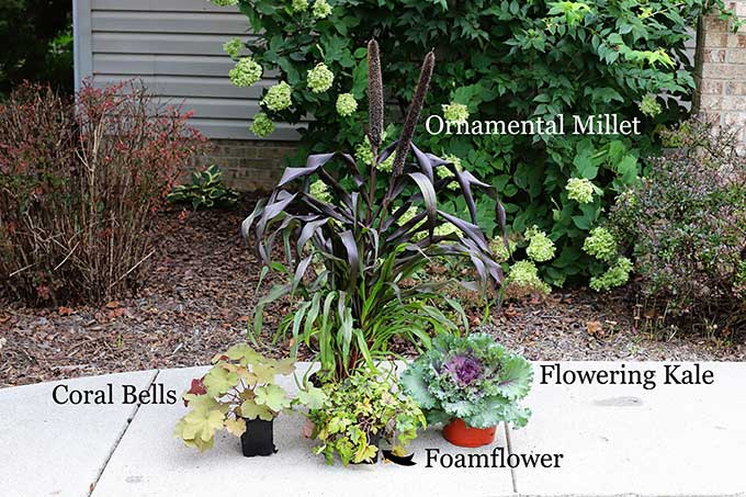 Fall flowers to plant in containers