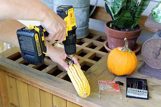 Drilling hole into corn cob to make a fall corn garland.