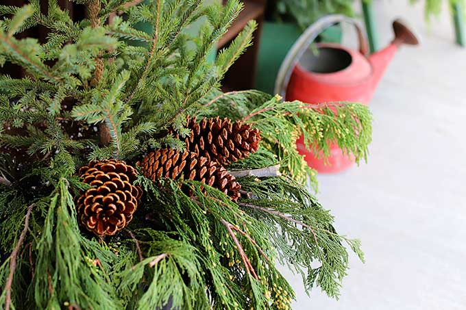 Pinecones in a winter porch pot