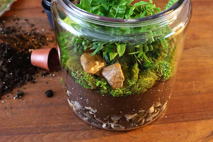 Rocks in a terrarium