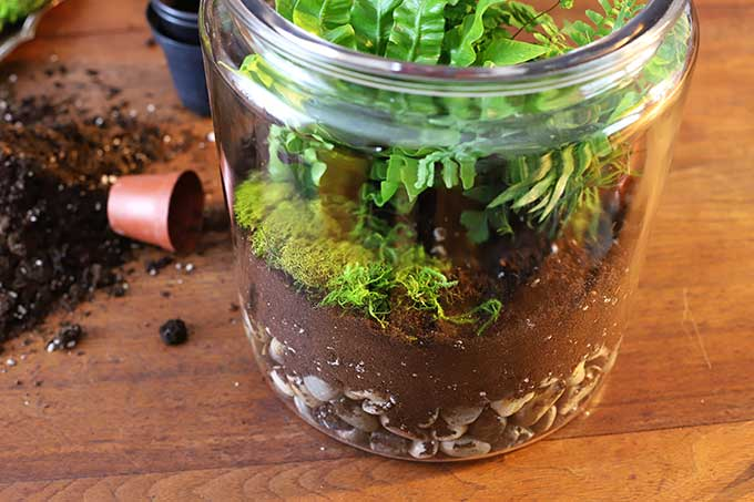 Moss in terrarium
