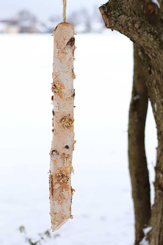 Log bird feeder DIY project using suet