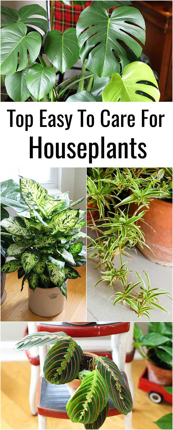 Easy to care for houseplants anyone can grow whether you have a green thumb or not! These plants are perfect for beginner gardeners!