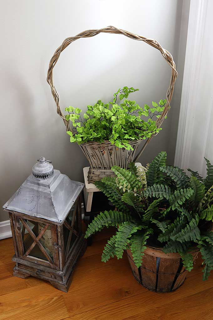 Ferns in baskets