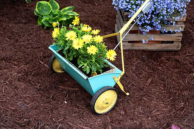 Vintage seed spreader used as a planter