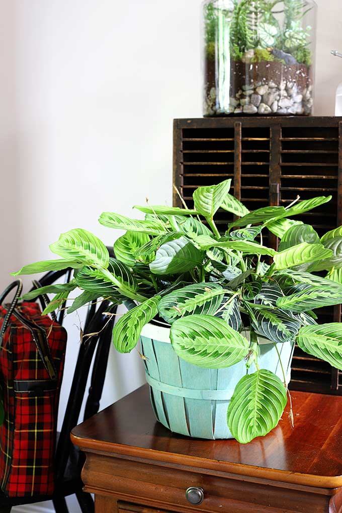 Bushel basket repurposed into a planter.