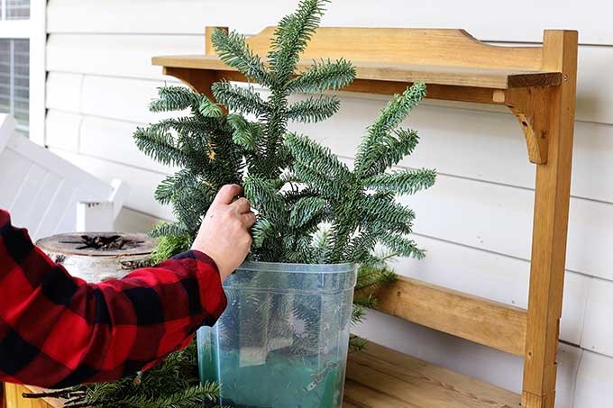 placing Noble Fir in holiday arrangement