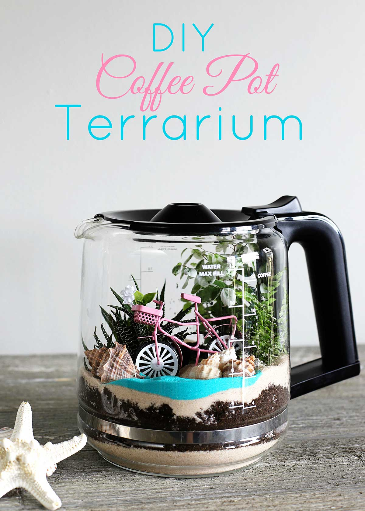Quick and easy DIY coffee pot terrarium tutorial.