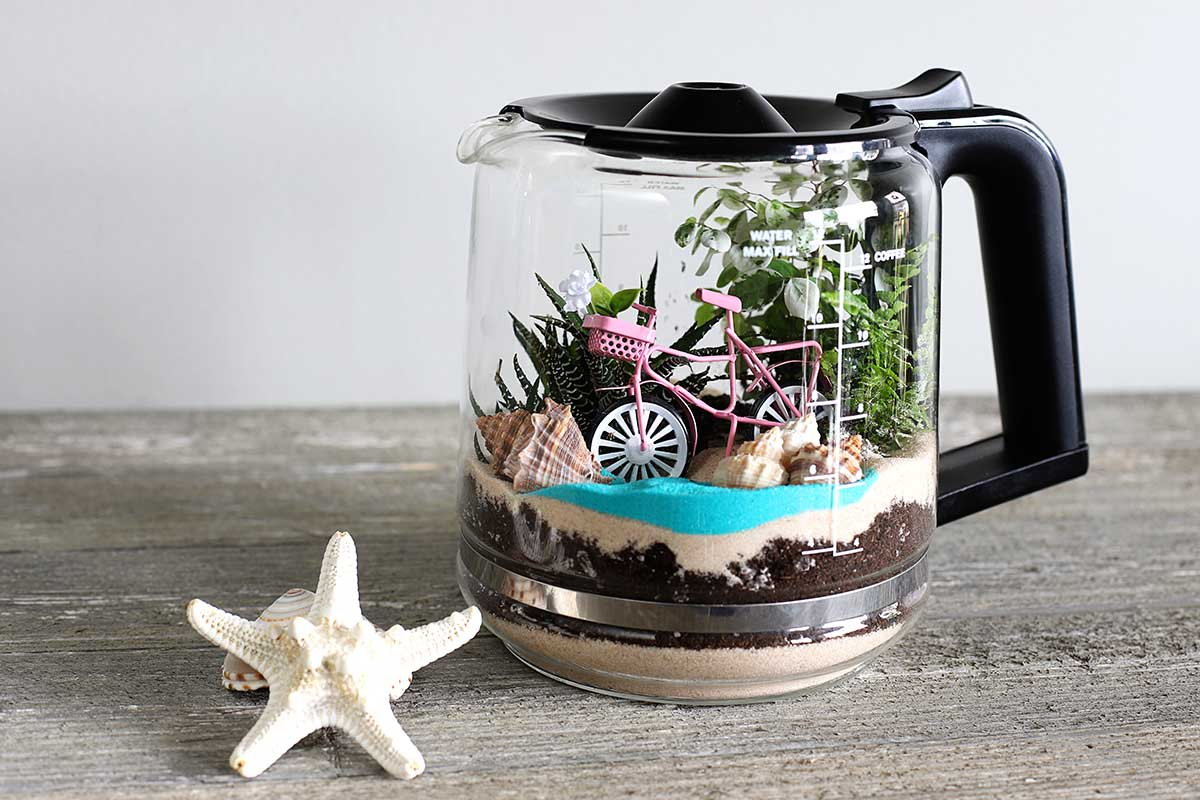 How to make a terrarium out of a coffee pot
