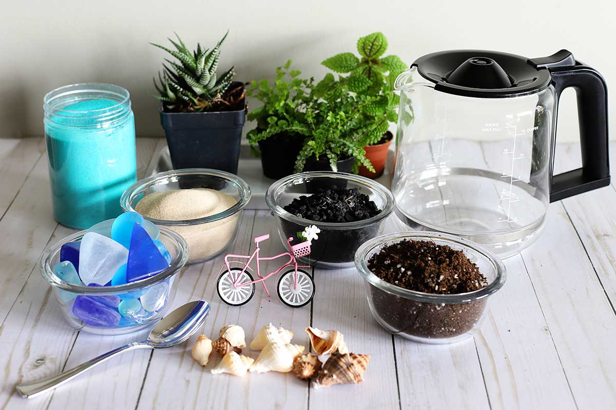 Coffee pot terrarium supplies