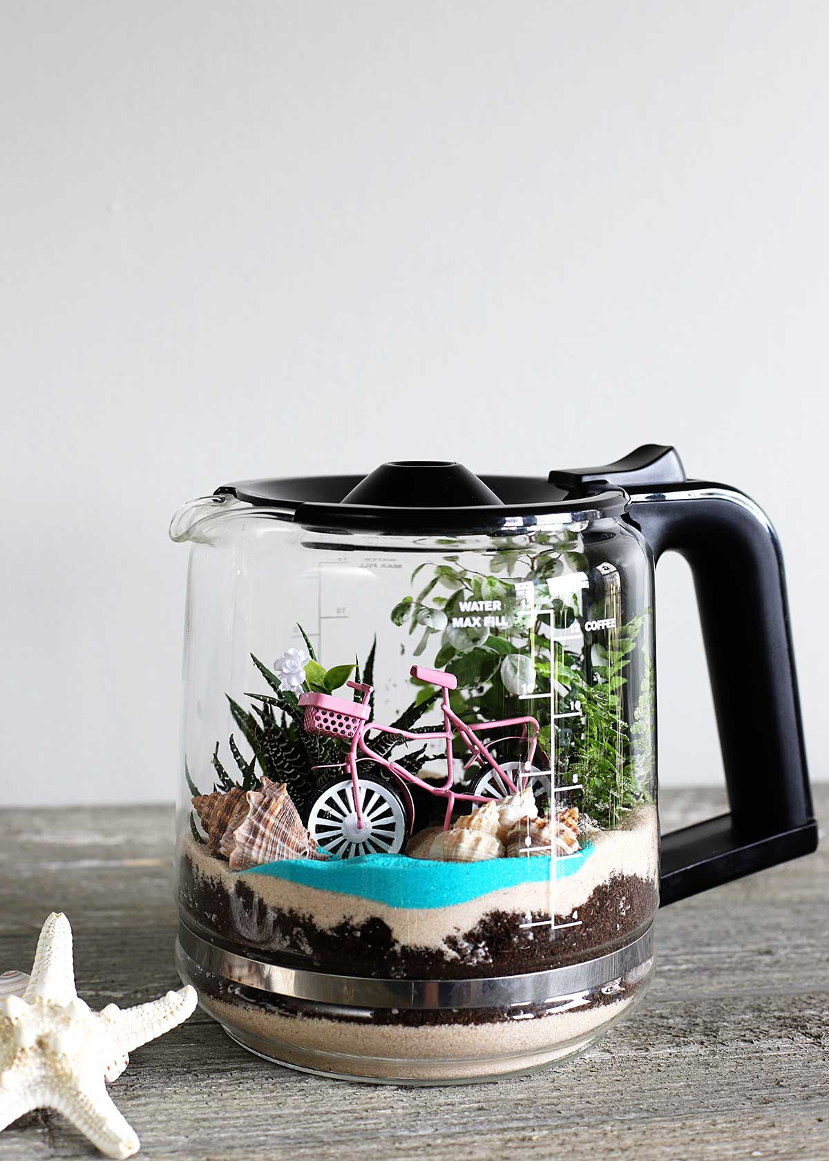 Coffee pot terrarium DIY upcycle project