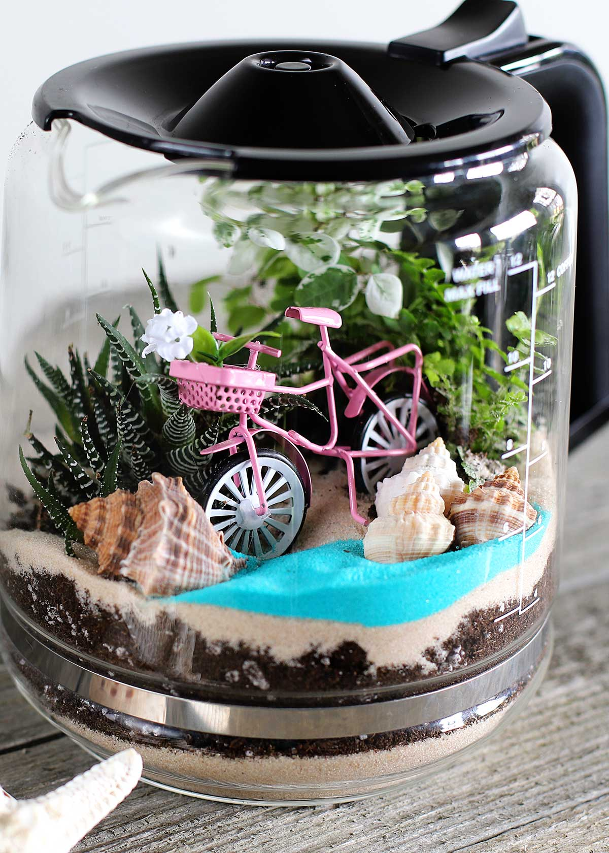 repurposed coffee pot terrarium tutuorial