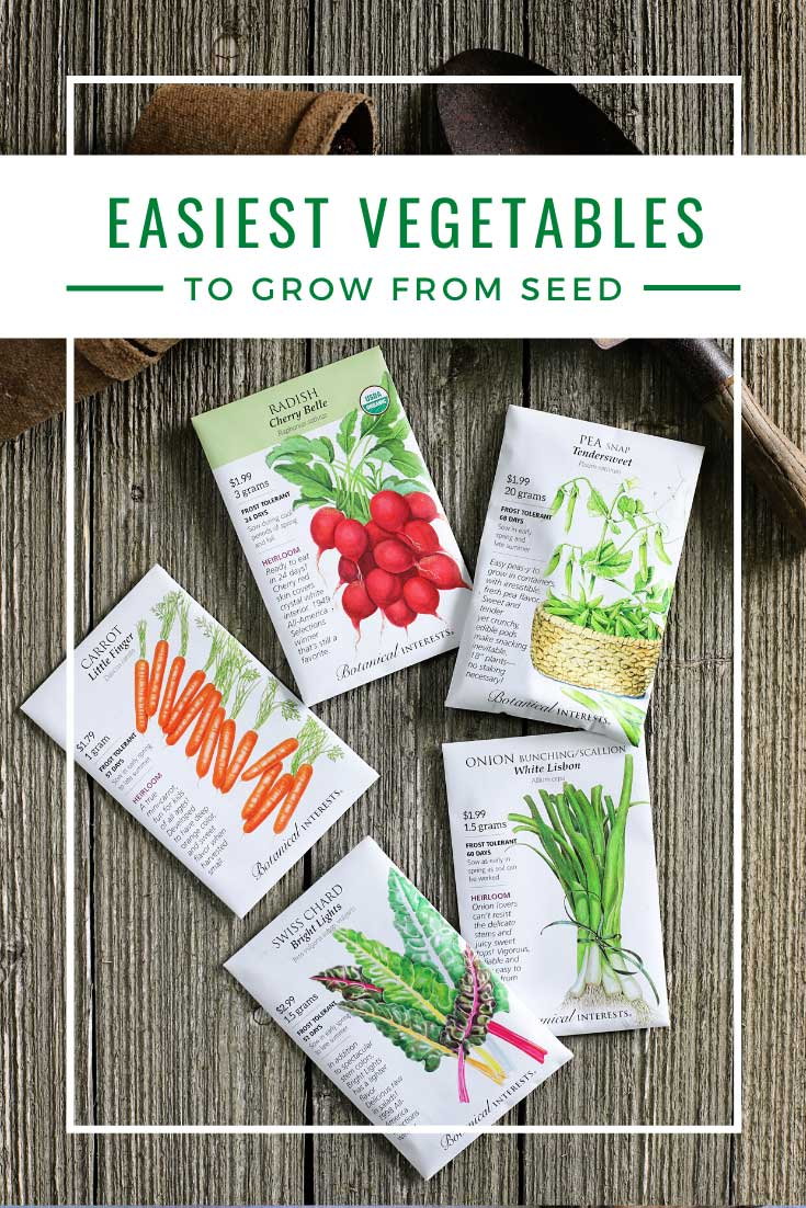 Easiest vegetable to grow from seed