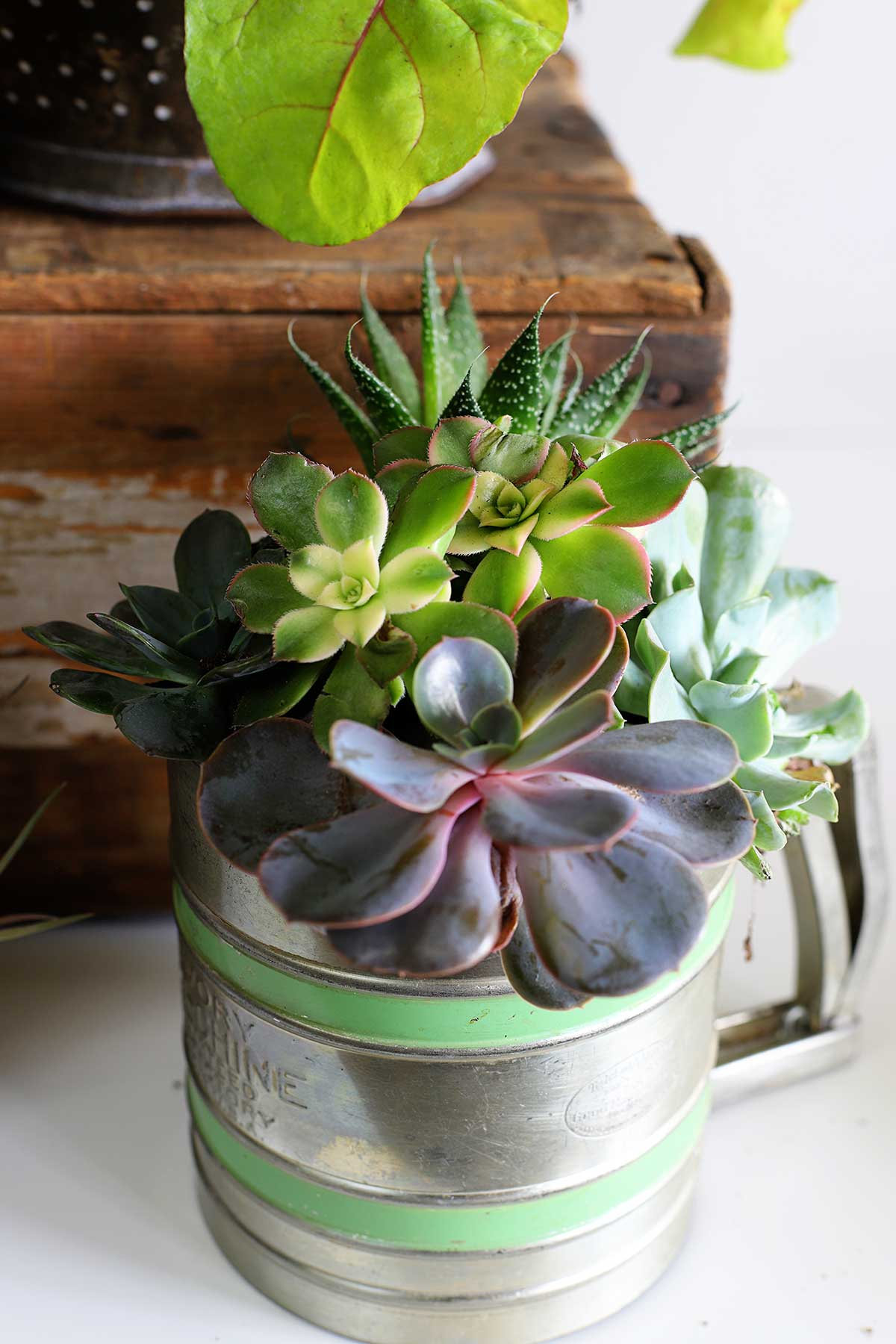 Flour sifter used as a succulent planter