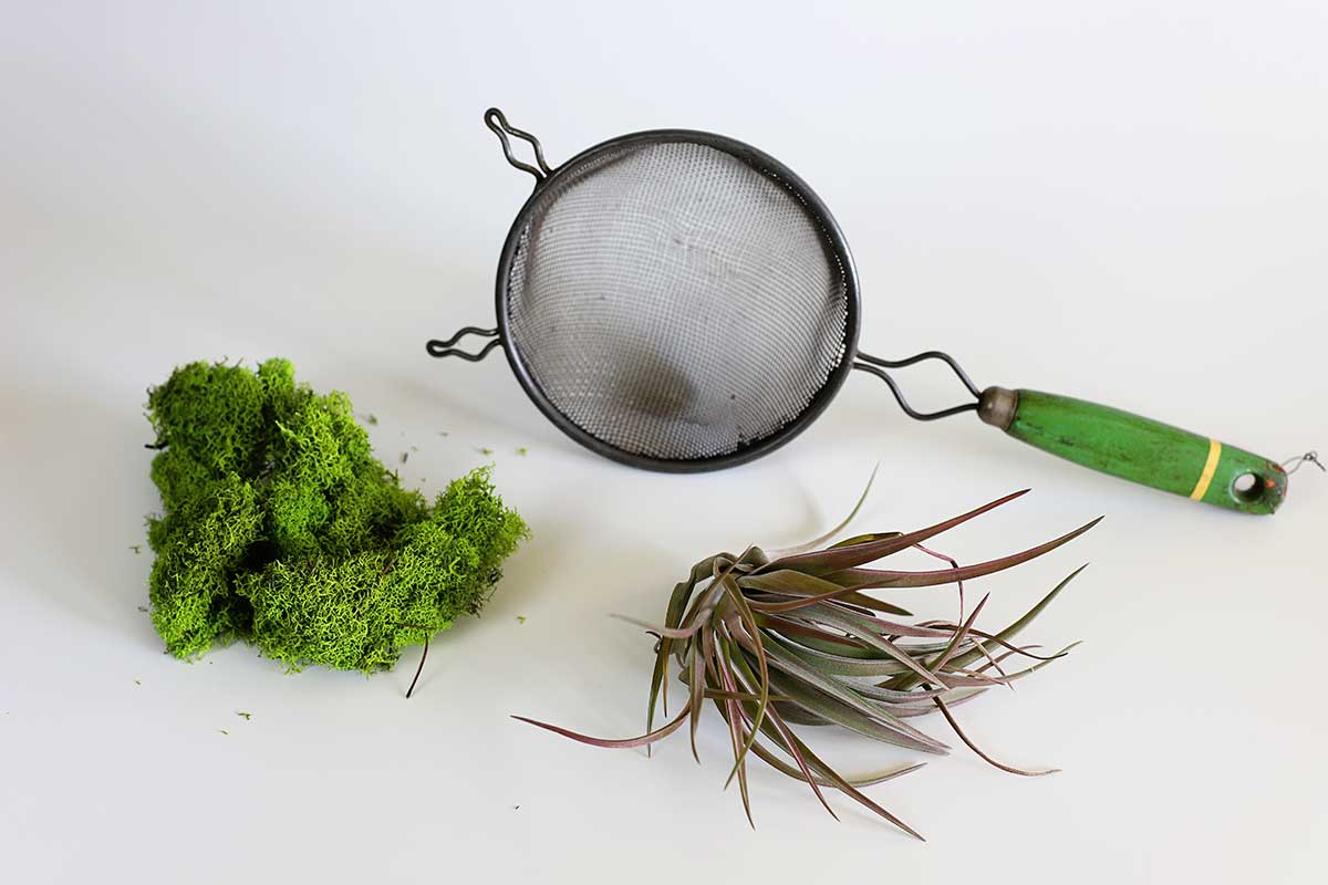 supplies to make air plant holder out of kitchen strainer