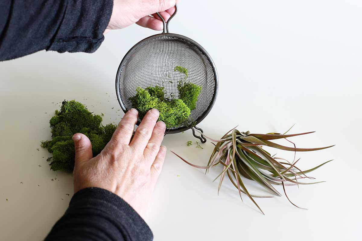 putting moss in kitchen strainer
