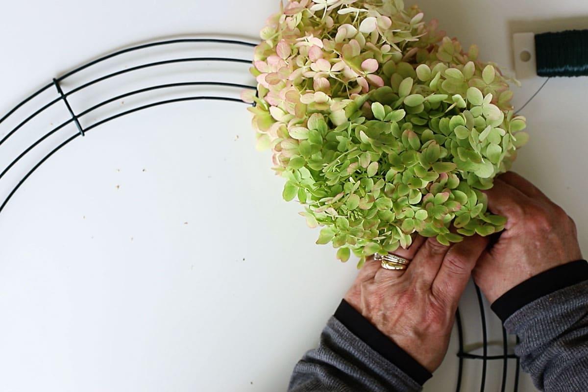 attaching hydrangea blooms onto wire wreath form