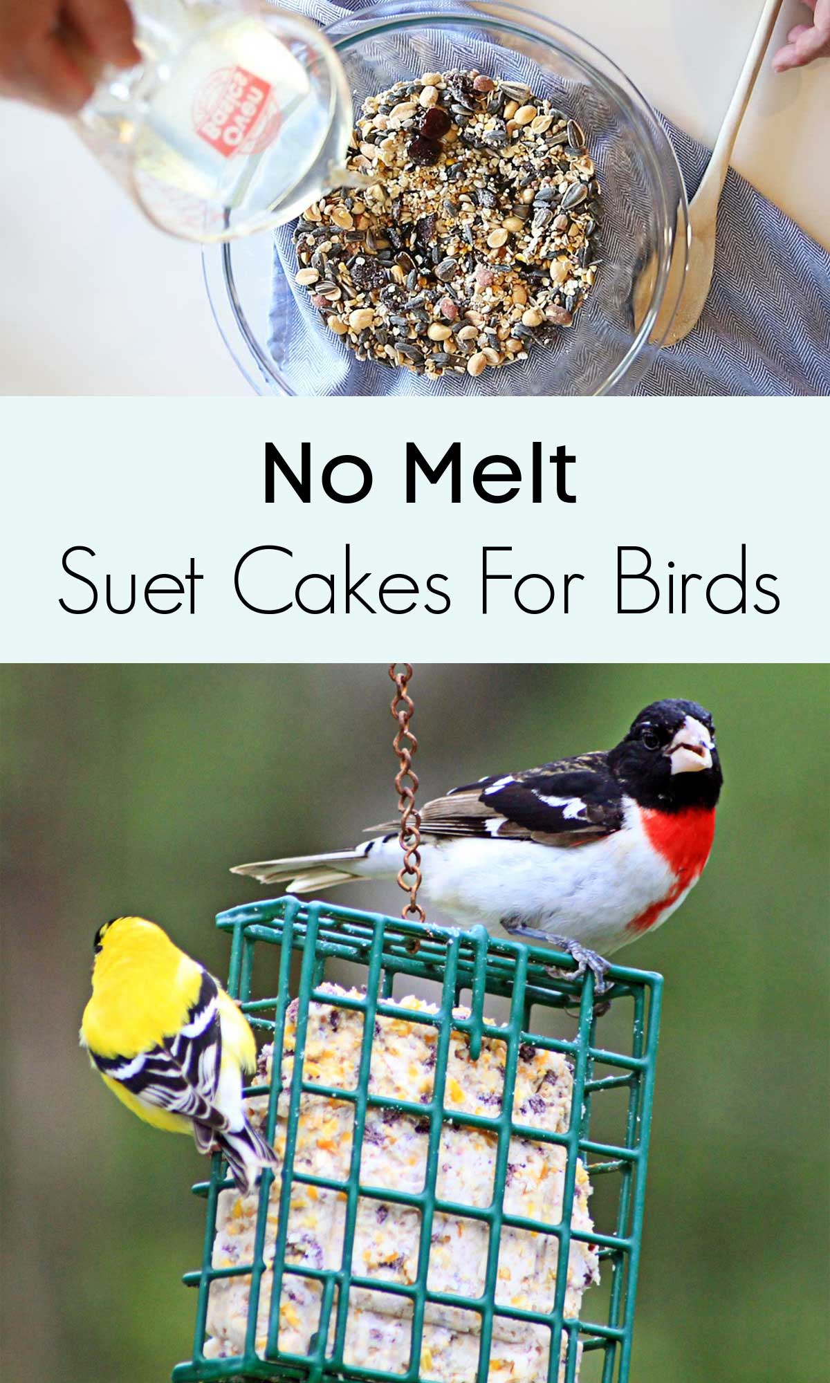 no melt suet cakes for the birds in winter